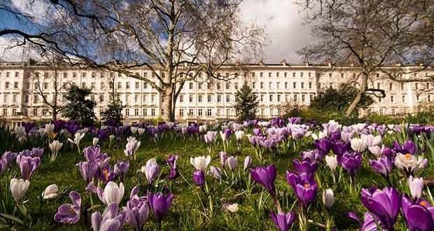 Warwick Square garden