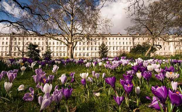 Spring in Warwick Square garden (photo © Ken Sparkes)